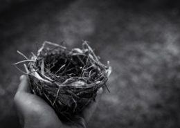 Empty Nest in Hand